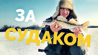 ЗА СУДАКОМ Рыбалка со льда 2021 Зимняя ловля в отвес