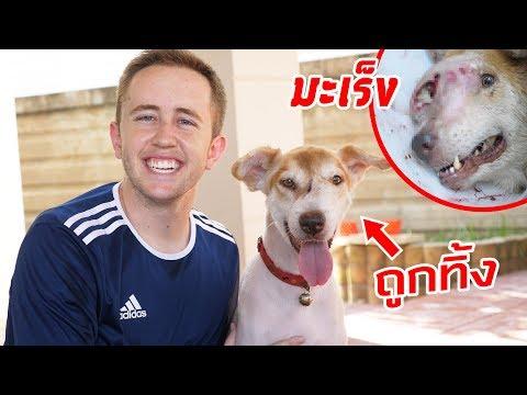 ช่วยหมาจรจัดใกล้ตาย รอดชีวิตจากมะเร็ง!! รักษานาน 1.5 ปี!!