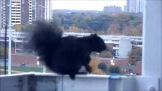Скачать Агар ошиклигим айтсам Rajabiy Agar Oshiqligim Aytsam Squirrel Белка на балконе 11 Kattaki Sincap