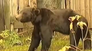 медведь ужас