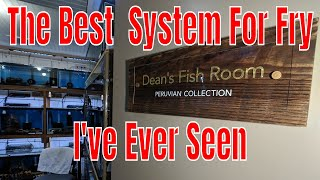 The Most Genius DIY System for Raising Baby Fish I've Ever Seen Featuring Master Breeder Dean!
