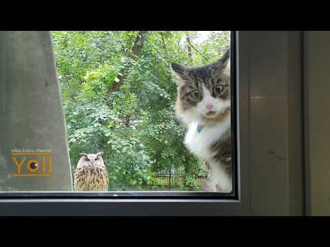 16 секунд отборного стресса для котика - Лучшие приколы. Самое прикольное смешное видео!