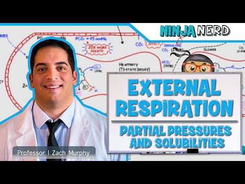 Respiratory | External Respiration: Partial Pressures & Solubilities | Part 3