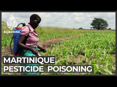 Martinique protesters seek accountability for pesticide poisoning