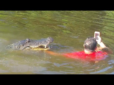 Guide Plays with Alligator in Swamp