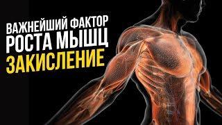 Закисление для роста мышц (Бодибилдинг, Тренировки, Телостроительство)