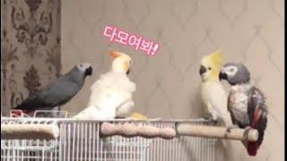 [루이&몽몽&다정&로미] 저혈압에 좋은 새린이 사남매 육아👍🏻