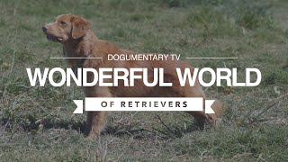 THE WONDERFUL WORLD OF RETRIEVERS