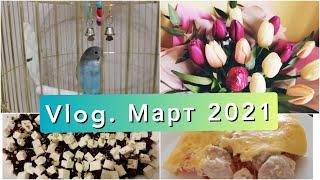 Vlog. Рецептики. Весна. Попугай #влог#март#рецепты#весна