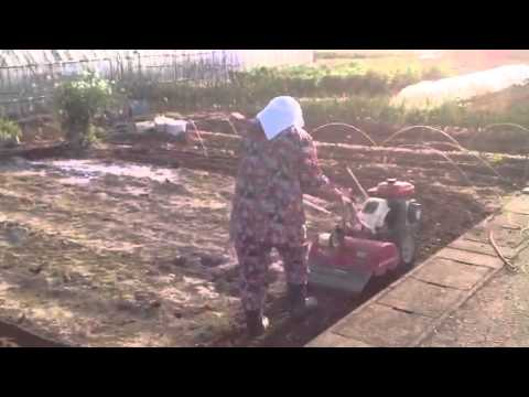 Woman do most the vegetable farming in Japan