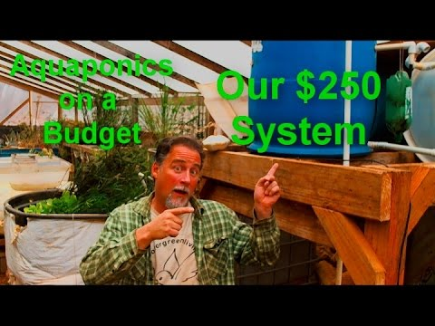 Aquaponics on a Budget (Our $250 System)