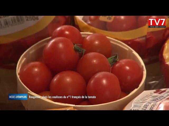 Rougeline, dans les coulisses du numéro 1 français de la tomate