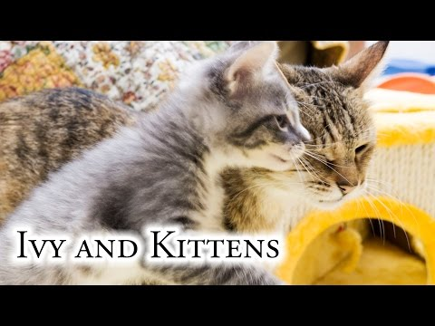 Ivy And Kittens