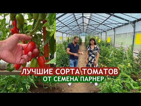 Лучшие томаты на площадке Агрофирмы «Семена Партнёр»