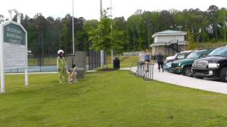 Dog Training: Great Dane Puppy Distraction Training At The Park & Socialization