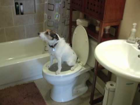 Dog Pooping In The Toilet
