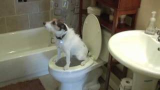 Potty Train Your Dog
