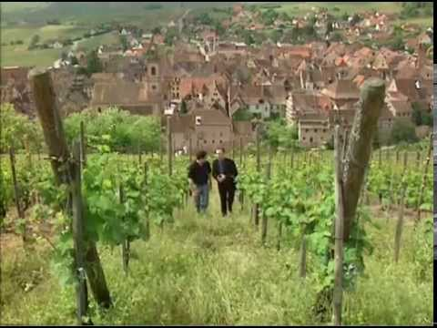 Discover the Wines of Alsace, France
