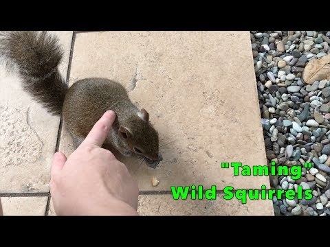 Achieving a Dream: 'Taming' Wild Squirrels!