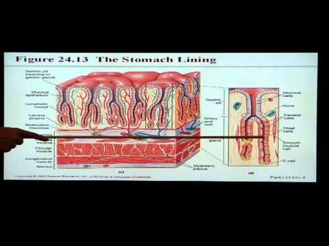 Anatomy and Physiology Help: Chapter 24...