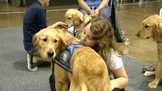 Special dogs bringing comfort to victims