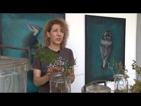 Eco Artist Christine Baeumler - The PlayList