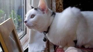 Cat chirps like a bird! [HILARIOUS]