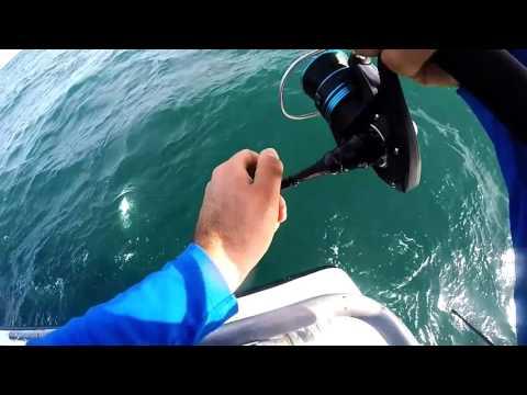 King mackerel kelly fishing fleet 3-16