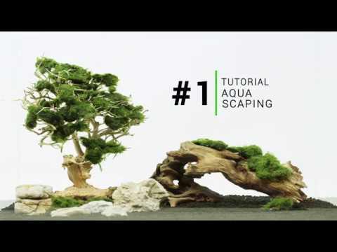 Aquascape for beginners - Bonsai Driftwood aquarium tree layout Tutorial #1
