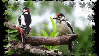 Vogelfotografie Mein Hobby