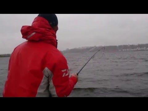 судак ловля судака на поролоновую рыбку