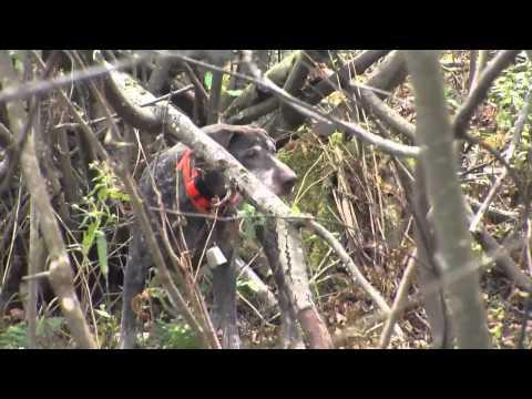 Outdoor Journal: Upland Bird Hunting, West Mountain WMA