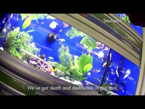 BBC Watchdog - Pets At Home - Dead fish, Guinea pigs with Ringworm ...