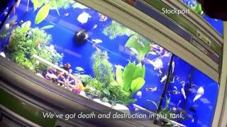 Bbc Watchdog - Pets At Home - Dead Fish, Guinea Pigs With Ringworm, Ill Rabbits