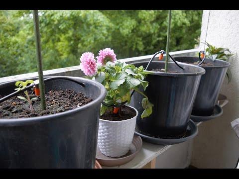 gardena-automatische-bewässerung-ohne-hauswasseranschluss-für-extra-sicherheit