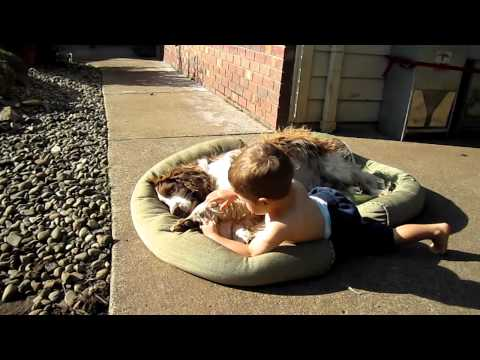 Toddler & Springer Spaniel Snuggling