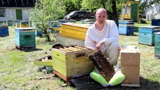 видео Пчелопакеты