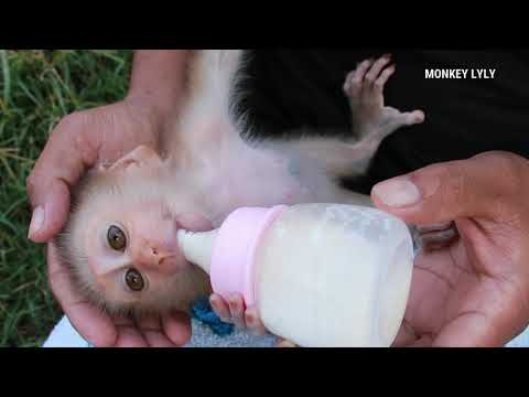 Dad Feeding Milk to Baby  Baby Lyly Crying Suggest Routine Daily