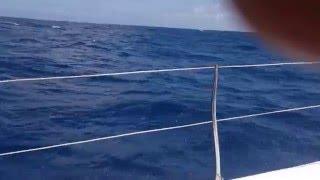 Catamaran ride to Ile Plate, Flat Island (Mauritius)