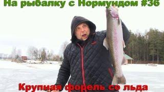 Крупная форель со льда : На рыбалку с Нормундом #36
