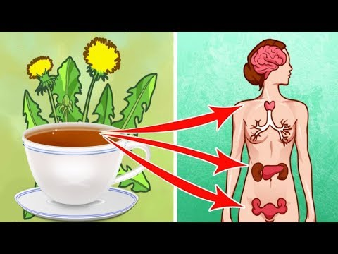 7-reasons-you-should-drink-a-cup-of-dandelion-tea-everyday