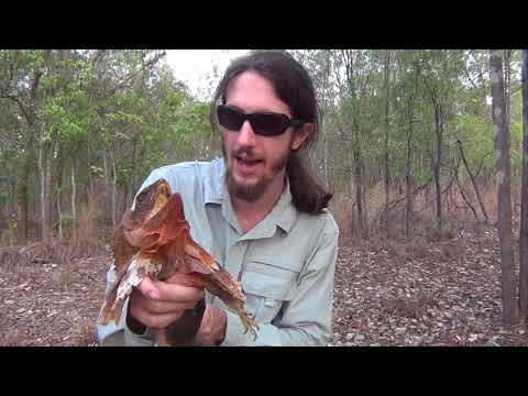 REPTILES OF DARWIN - Cold Blooded Cousins