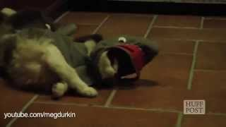 Animale amuzante imbracate haios de halloween