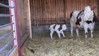 Petite présentation du bâtiment des vaches