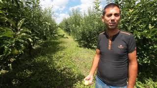 Градина с ябълки - Мариян Маринов