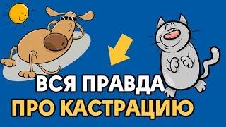 Кастрация в СПб