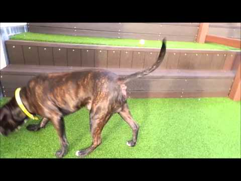 Dogs Trust Manchester - Chico
