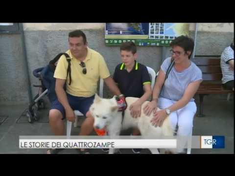 I cani del Premio Fedeltà- servizio di Emanuela Pericu