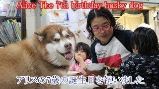 ハスキー犬アリス 7歳になりました。 孫達も大きくなりお祝いしてくれて...