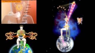 Energy Spirals Microcosmic Orbit
